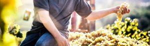 Weingut Beratung im laufenden Betrieb