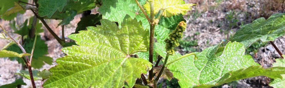 Weinregion Mosel: Kultweingut mit 5 Hektar zu verkaufen