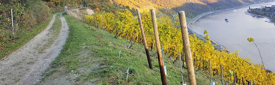 Rheintalromantik: Steillagen-Weingut mit 6 Hektar zu verkaufen