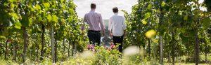 Nachfolge und Übergabe des Weingutes