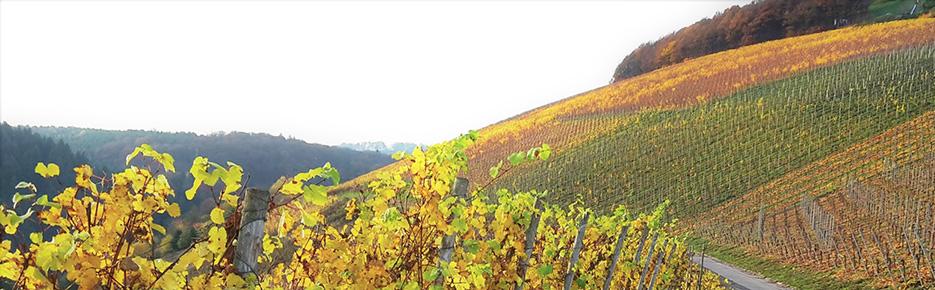 Bergstraße: Rarität – Weingut mit ca. 20 ha zu verkaufen
