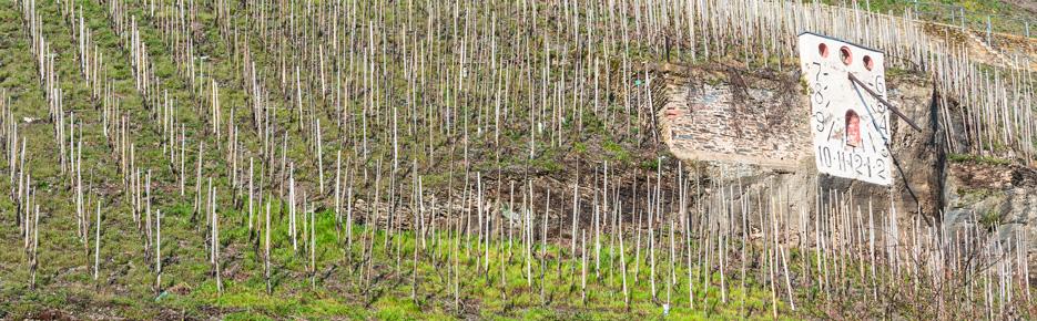 Ausblick und Sonne: Moselweingut mit 5 Hektar zu verkaufen