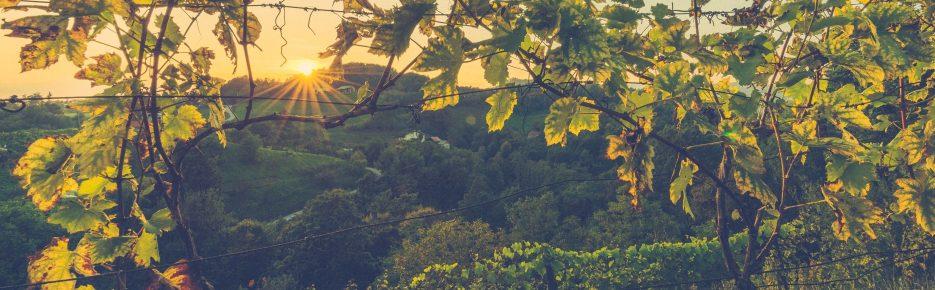 Weinbaugebiet Nahe: Heimat erleben – Weingut mit 15 Hektar zu verkaufen